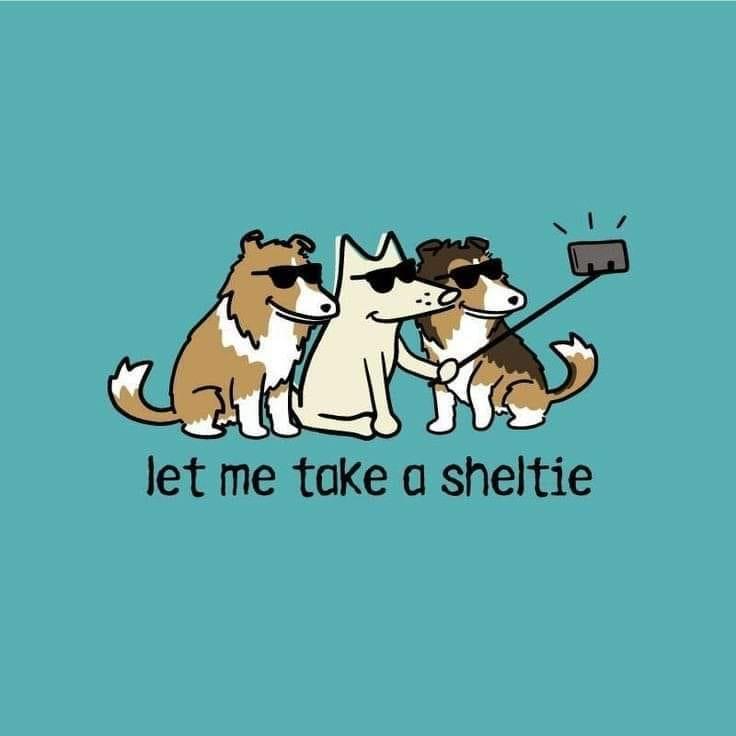 Let me take a sheltie